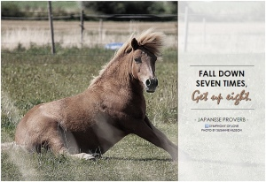 fall down get up pony
