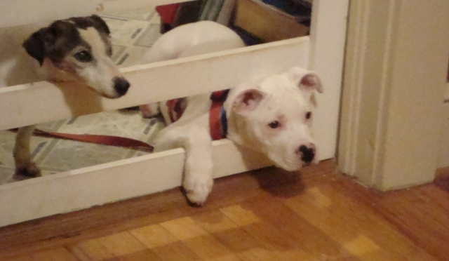 Heartsong Pets – Dog Training