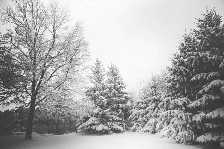 snow landscape trees winter