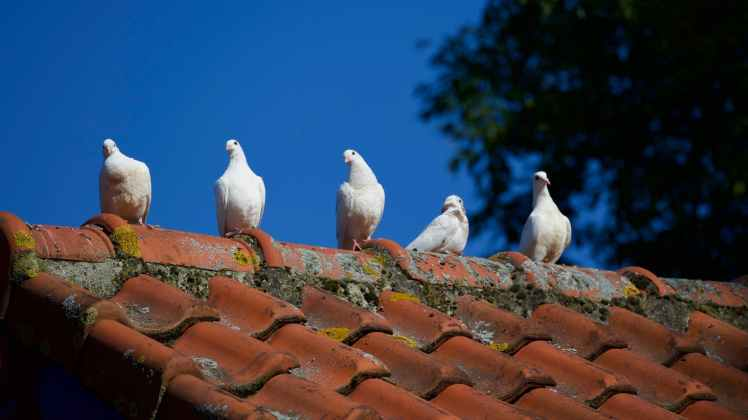 animal animal photography avian birds